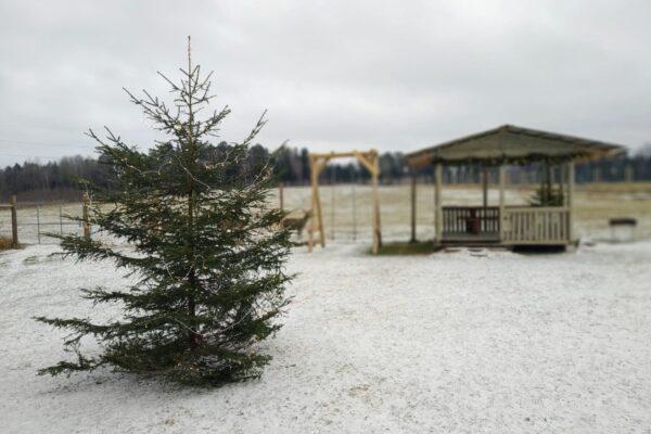"""Ziemas sezona """"Dobelniekos"""""""